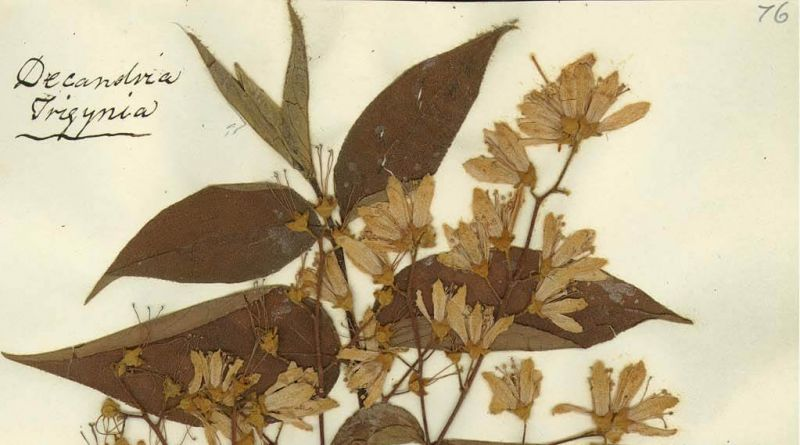 A photograph of pressed leaves and flowers