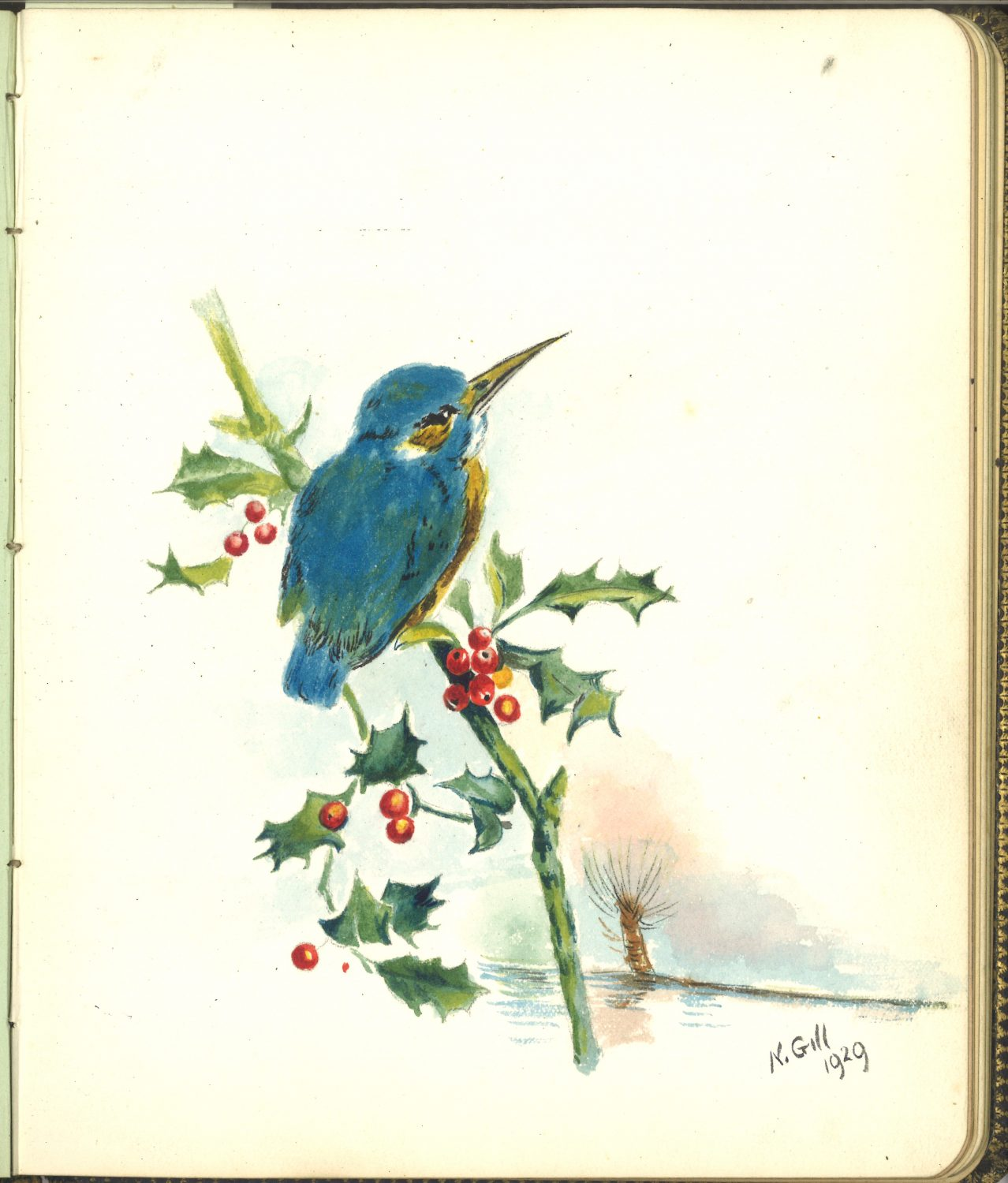 coloured drawing of a small blue bird sitting on a holly branch
